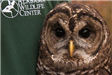 Coosa the Barred Owl